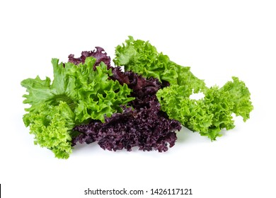 Lettuce leaves two varieties - red Lollo Rosso and pale green Lollo Bionda on a white background