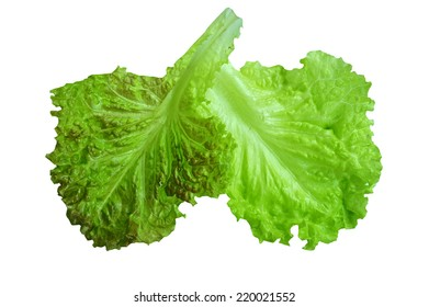 lettuce salad on a white background