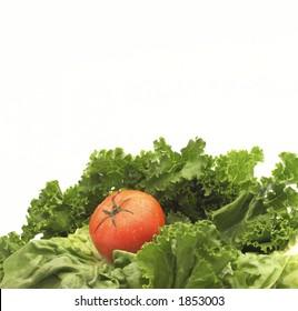 Lettuce and tomato