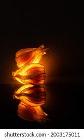 Leuchtende Physalis Frucht im schwarzen Hintergrund - Shutterstock ID 2003175011