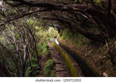 Levada walk in Madeira Island, Portugal. Mysterious forest walk.