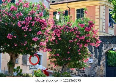 Levanto, La Spezia, Liguria / Italy - June 22 2017: Townscape of Levanto.