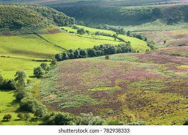 Levisham Beck in the Hole of Horcum in summer, in the North York Moors, UK