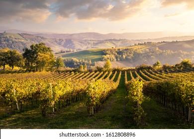 Levizzano Rangone countryside and vineyards during sunset. Levizzano Rangone, Castelvetro di Modena, Modena province, Emilia Romagna, Italy