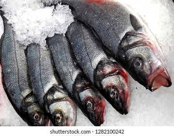levrek fish on ice