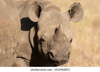 Lewa Wildlife Conservancy, Kenya, Africa