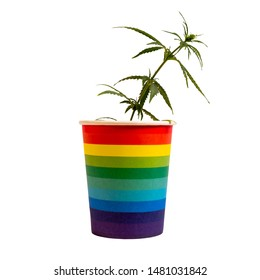 LGBT concept and cannabis. Young sprout of marijuana in a rainbow cup.Home cultivation of hemp. Freedom, equality and love, pleasure and drugs. Isolate