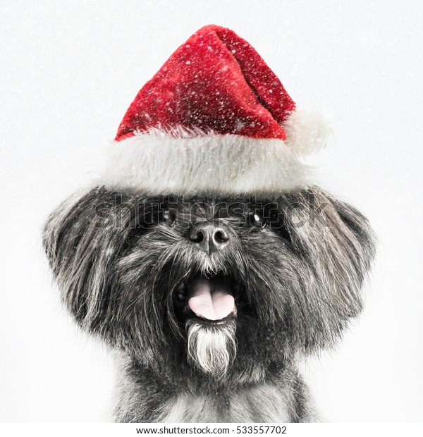 Lhasa Apso puppy wearing a Christmas Santa hat in the snow