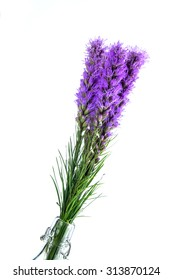 liatris and bottle on white background