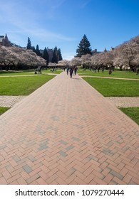 The Liberal Arts Quadrangle, more popularly known as the Quad, is the main quadrangle at the University of Washington in Seattle, Washington.