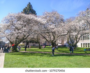 The Liberal Arts Quadrangle, more popularly known as the Quad, is the main quadrangle at the University of Washington in Seattle, Washington. The quad is lined with thirty Yoshino cherry trees