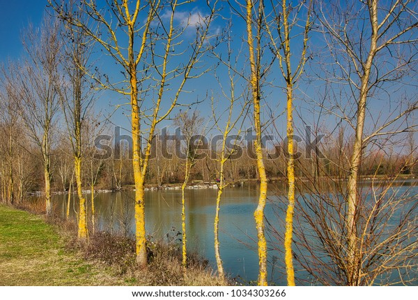 Lichen clad trees on the edge of a lake