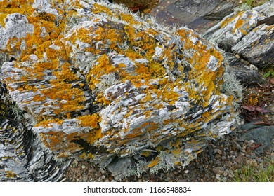 Lichen Covered Rocks on Beach