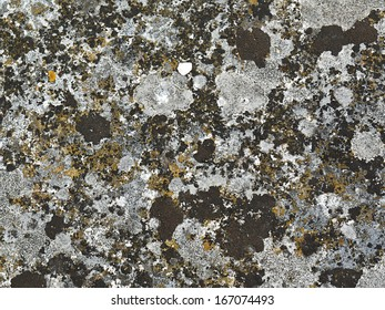 Lichen covered stone surface. Good for backgrounds.