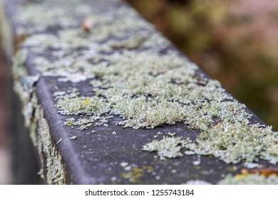Lichen grow on a powder-coated railing