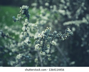 Lichen growing on a tree branch in the spring