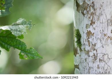 Lichen, Moss and Leaf - Atlantic florest, Brazil