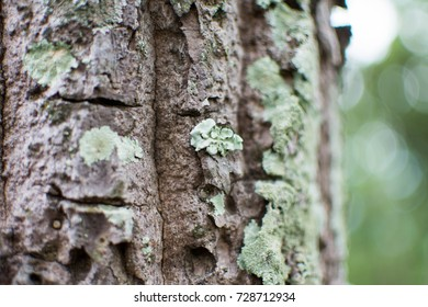 lichen on branch of tree in forest. subject is blurred.