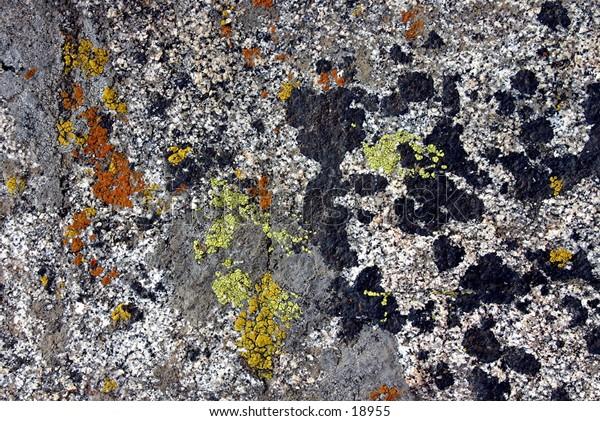 lichen on granite