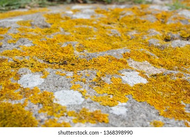 Lichen on rocks on the coast of Brittany