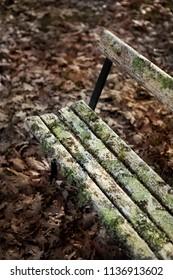 Lichen on a weathered bench in Autumn