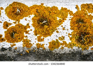 lichen and other plants on grunchy wall
