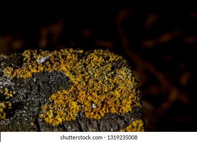 Lichen in Spring Sunlight