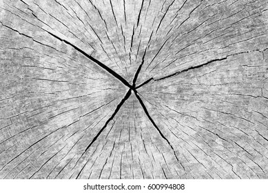 Lichenic Wood Background: Cracked Weathered Tree Cross-Section