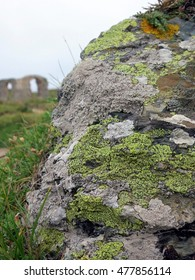 Lichens with bright yellow, white, and orange crustose thalli in foreground of maritime coastal landscape on Llanddwyn Island, Anglesey, Wales.
