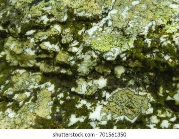 Lichens & Moss on a Boulder