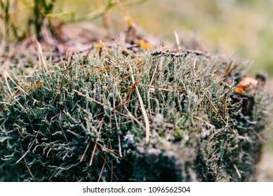 lichens on an old stump