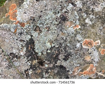 Lichens on rock, St Mary's Loch, Scotland, Great Britain