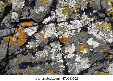 Lichens orange, white, and black attached to textured grey rock along the coast of Llanddwyn Island, Anglesey, Wales.