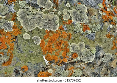 Lichens are symbiotic fungi and algae. They are able to grow on the rocks clean and often form on the rocks and stones beautiful patterns / Lichen on a green stone.