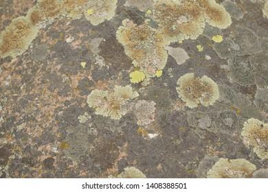 lichlichen growing on a rocken on rock