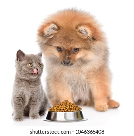 licking kitten and puppy with a bowl of dry food. isolated on white background
