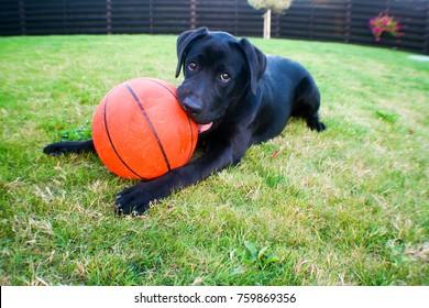 lie on the grass, eating basketball ball, playing with ball