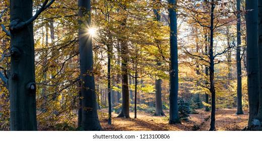 Liesbos forest during autumn