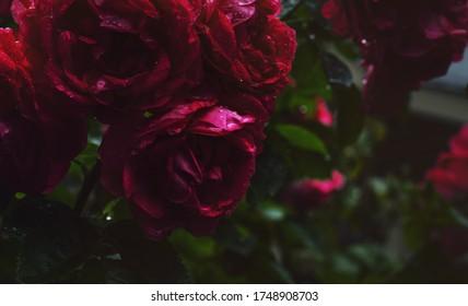 Das Leben ist ein Rosenbett, wenn man bei den richtigen Leuten ist