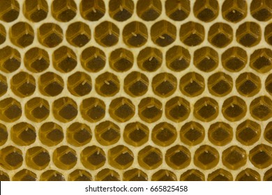Life of the bee begins with egg.