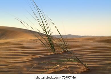 Life beginning in the desert