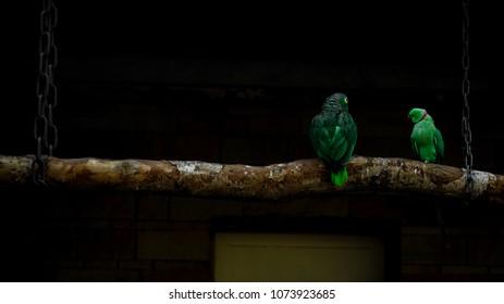 life as a Bird. Leben als Vogel
