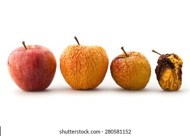 life cycle from apples
