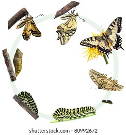 Butterfly Life Cycle Images Stock Photos Vectors Shutterstock