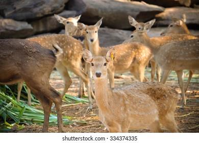 life deer at the zoo