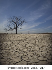 Life ecology solitude concept - lonely dry dead tree on cracked earth in desert with crack land texture soil against sky with clouds Empty concept space for inscription Idea of bad disaster in nature