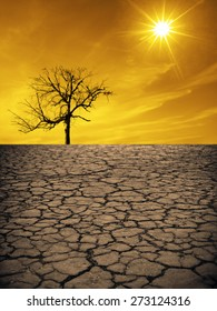 Life ecology solitude concept - lonely dry dead tree on cracked earth in desert with crack land texture soil against sky with sun ray Empty concept space for inscription Idea of bad disaster in nature