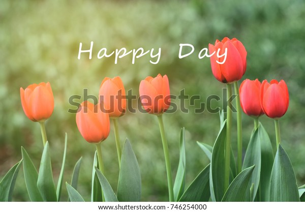 Life inspirational quotes - Happy Day.