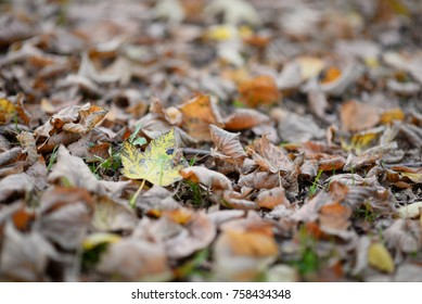 life and leaf in forest