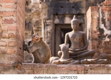 The life of long tail funny monkeys with archaeological sites. Lopburi Thailand